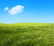 Grön naturbakgrund Royaltyfri Fotografi