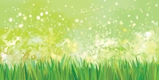 Grön naturbakgrund för vektor Royaltyfri Bild