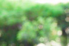 Grön naturbakgrund, selektiv fokus royaltyfri bild