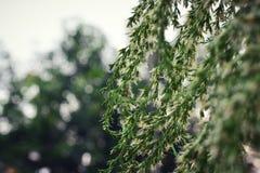 Grön naturblomma och bokehbakgrund Royaltyfria Foton