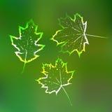 Grön naturekologi för bakgrund Royaltyfria Bilder