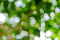 Grön naturlig bakgrund av ut ur fokusträdet eller bokeh Fotografering för Bildbyråer