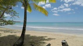 Grön naturlig karibisk strand nära Cabarete stock video