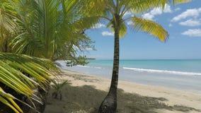 Grön naturlig karibisk strand nära Cabarete lager videofilmer
