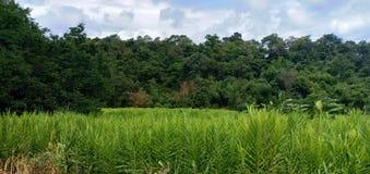 Grön naturlig och himmelbakgrund royaltyfri foto