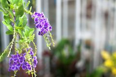 Grön naturträdgård och blom Arkivbild