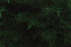 Grön och mörk växttextur royaltyfri bild