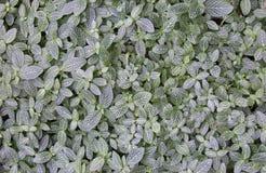 Grön och vit bladbakgrund Royaltyfri Bild