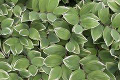Grön och vit bladbakgrund Arkivfoto