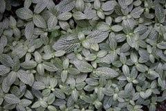 Grön och vit bladbakgrund Arkivbild