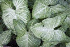 Grön och vit bladbakgrund Arkivbilder