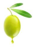 Grön oliv arkivbild