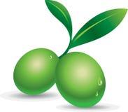 grön olivgrön Arkivbild