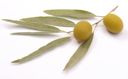 grön olivgrön för filial arkivfoton