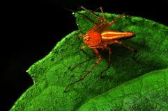 grön orange Arkivbild