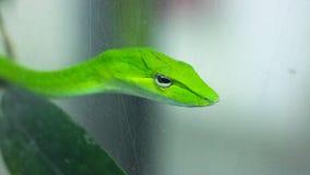Grön orm på trädet royaltyfri bild