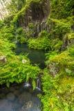 Grön ormbunke och liten vattenfall i den takachiho klyftan, Miyazaki, Japan Arkivbilder
