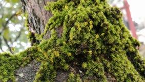 Grön ormbunke runt om träd Fotografering för Bildbyråer