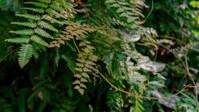 Grön ormbunkebakgrund arkivbild