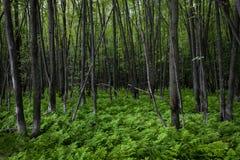 Grön ormbunkematta i en fridsam skog arkivfoton