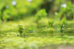 grön pöl Arkivfoton
