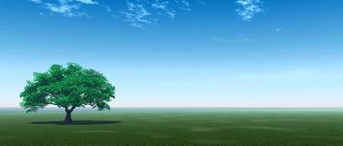 grön p-tree Fotografering för Bildbyråer