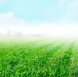 Grön Paddy Background fantasi fotografering för bildbyråer