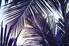 Grön palmblad över himmelbakgrund Härligt palmbladfoto med lynnig effektsignal Arkivfoton