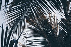 Grön palmblad över himmelbakgrund Palmbladbakgrund Tropiskt naturtappningtryck eller affisch royaltyfria bilder