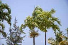 Grön palmblad på bakgrund för blå himmel Optimistiskt tropiskt landskapfoto Exotiskt ställe för semester arkivfoton