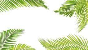 Grön palmblad som isoleras på vit bakgrund med den snabba banan royaltyfri illustrationer