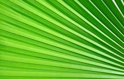 Grön palmbladmodellbakgrund Arkivbilder