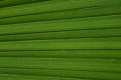 Grön palmbladstrukturnärbild royaltyfri fotografi