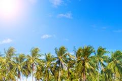 Grön palmträdhorisont på den tropiska ön Blå och solig himmel Arkivbild