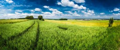 grön panorama för fält arkivfoton