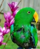 Grön papegoja bredvid till rosa blommor Arkivfoton