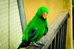 Grön papegoja som vilar på ledstången Royaltyfri Fotografi