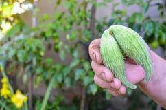 Grön papegojablomma i den härliga gräsplanträdgården Arkivbilder