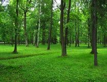 Grön park Fotografering för Bildbyråer