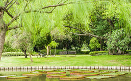 grön park Royaltyfri Bild