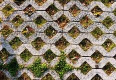 Grön parkeringsmodell av fyrkantiga cementgolvtegelplattor med gräsplan gr Arkivfoto