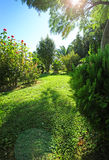 grön parksommar Royaltyfria Foton