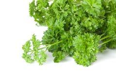 grön parsley för friskhet Arkivfoton
