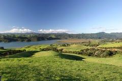 grön pastureland Royaltyfria Bilder