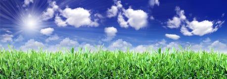 grön perfektion för fält Fotografering för Bildbyråer