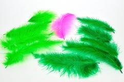 grön pink Fotografering för Bildbyråer