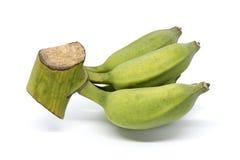 Grön Pisang Awak banan som isoleras på vit bakgrund Royaltyfri Fotografi
