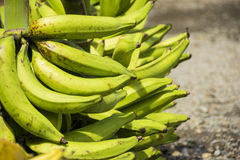 Grön pisang eller maduro Royaltyfria Foton