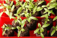 grön planta Royaltyfria Foton