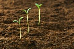 Grön planta - begrepp av ny livstid royaltyfri foto